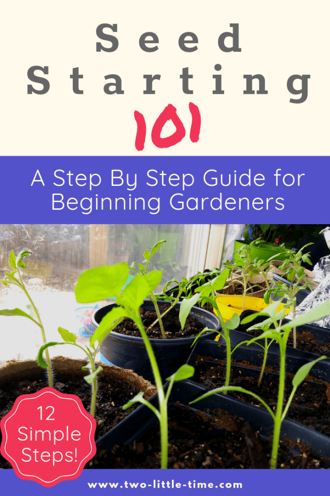12 Steps, Beginner Guide, Step by Step, Gardening