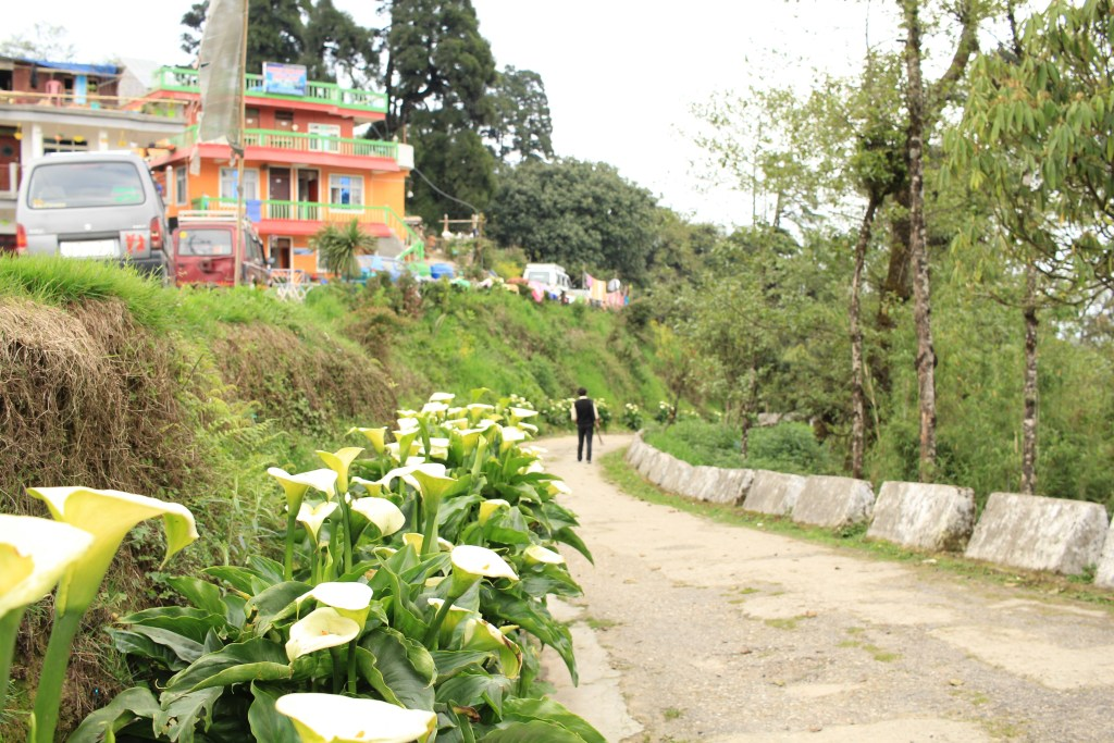 Calla lilies in Lepchajagat