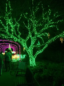 Some of the lights at Cheekwood Botanical Gardens.