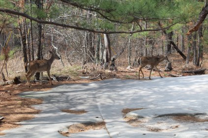 A herd of these ladies (OK, 4 or 5 of them) were also doing the hike up Stone Mountain.