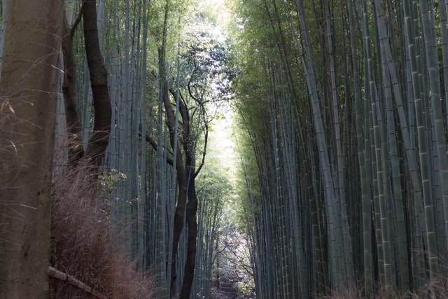 2014.04.12 (Kyoto) - 0004-2