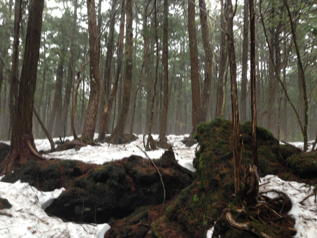 We were hiking in what is known as the Sea of Trees aka the Suicide Forest.  It would have been quite easy to get lost.