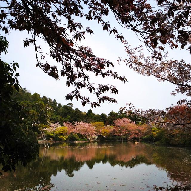 Kyoto25