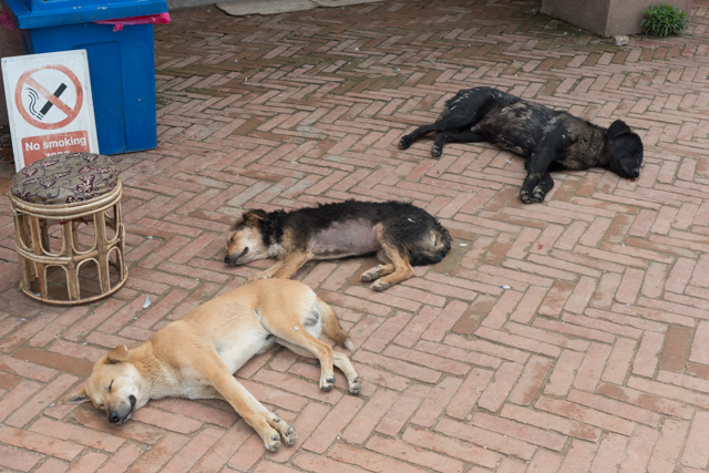 Sleeping dogs couldn't be budged.