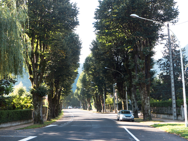 Many streets are lined with trees.