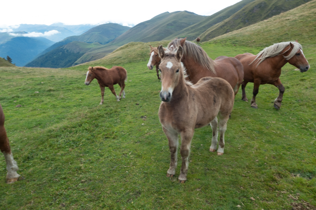 We met a quite friendly herd of beautiful (and well fed) horses all of a palomino color.