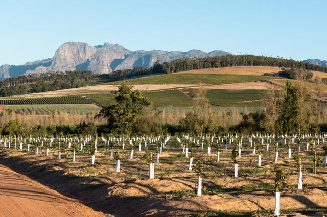 Patchwork quilts of planted crops framed Babylonstoren's grapevines.