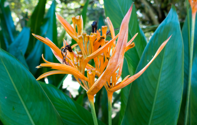 The Seychelles contains an immense diversity of species with over 1,100 flowering plants.