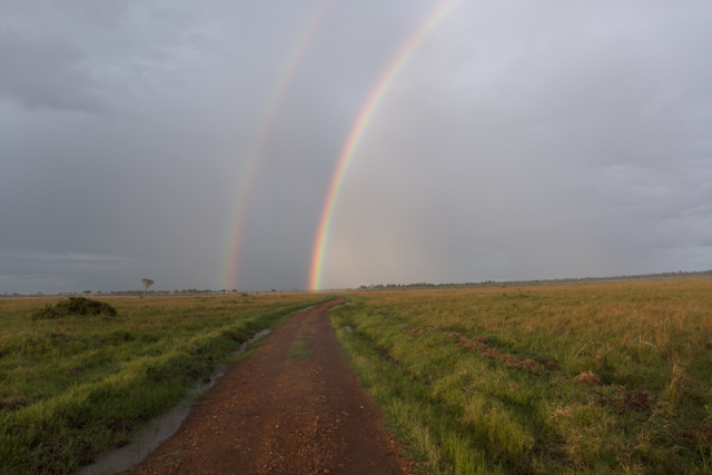 And the rain showers brought rainbows. There really is gold - Angama Mara gold - at the end of these rainbows.