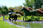 Washing Mother Earth's horses.