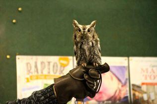 Echo the Owl