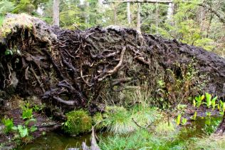 Uprooted roots