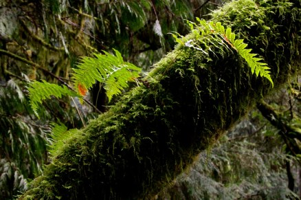 Moss and ferns everywhere