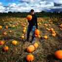 Spot the pumpkin