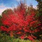 More fall colours