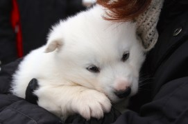 Puppy again
