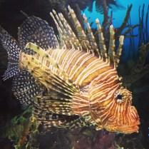 Angel Fish (?)