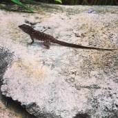Free-roaming lizard