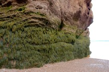 A skirt of seaweed