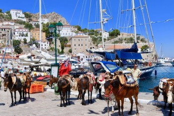 Donkeys on Hydra - Hydra-donkeys