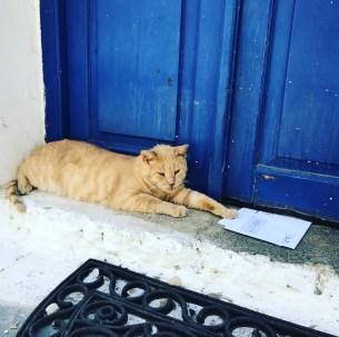 Cat of Poros