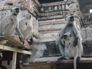 Macacos muitos macacos. Foram os responsáveis pela falta de internet porque quebraram os cabos