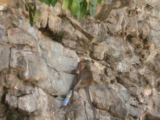 Poda Island onde os macacos são mais bravos e roubam a sua água