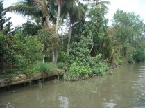 Indo para o fábrica de macarrão de arroz. Lembra a Amazônia