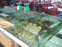 Aquários com os peixes frescos para preparar