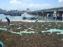 Nas margens do Rio Cai, trabalhadores secam as algas. Não conseguimos descobrir para que.
