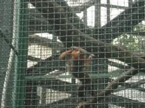 Jardim botânico e zoológico – vimos nosso mico leão dourado. È aqui que o pessoal faz Tai Chi de manhã no meio de 1000 plantas e muitos pássaros.