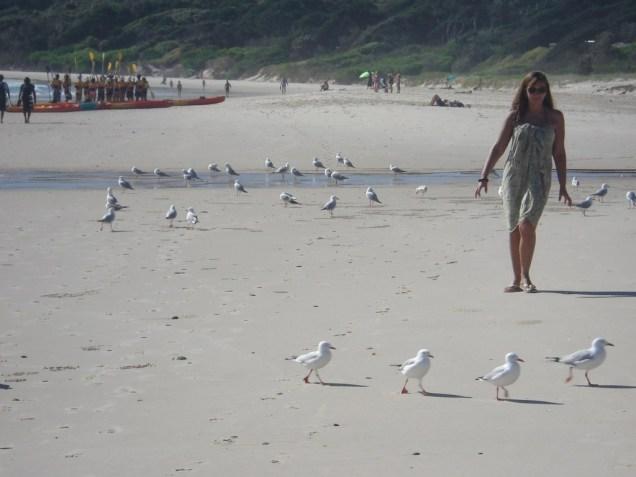 Fazendo a farra com as gaivotas
