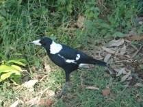 E um pássaro. Nunca vi tantos pássaros diferentes. Tem periquitos de todos os jeitos, cacatuas e outros que não sabemos o nome.