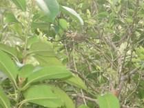 Essa aranha encontramos na trilha de 3 kms que fizemos ilha acima e ilha abaixo para ver outras baias