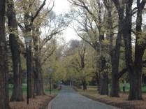 Treasury Gardens que emenda com o Fitzroy Garden. Jardins lindos antigos como Melbourne