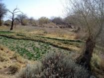 É um oásis porque tem água potável e dá para plantar. Por isso a vila era aqui.