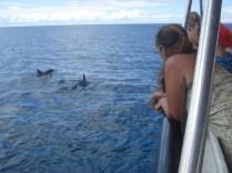 Eu observando os golfinhos