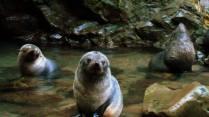 Outra foca bebe