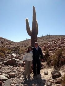 Cactus símbolo do deserto, mas o único do tipo que vimos