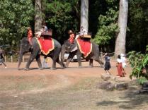 Turistas passeando de elefante