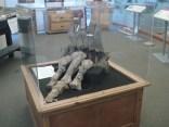 E ainda tivemos tempo de ir ver o museu dos dinossauros