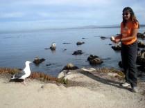 Disputados pelas gaivotas