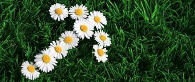 DaisyPointer_web_jpg