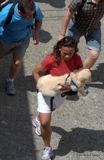Labrador puppy, Cinque Terre