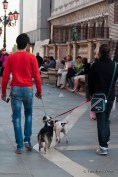 Dog walking in Venice