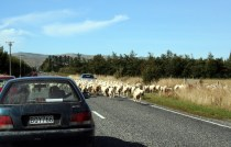 Road to Dunedin, New Zealand