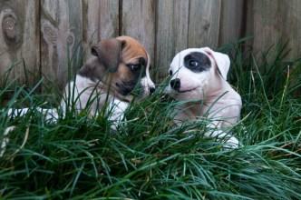 Puppies2013-158