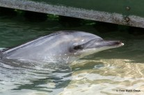 Dolphin in Dolphin Cove