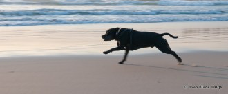 Bundy the dog races across the sand