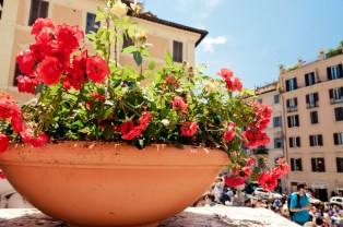 Spring flowers on the Spanish Steps, Rome
